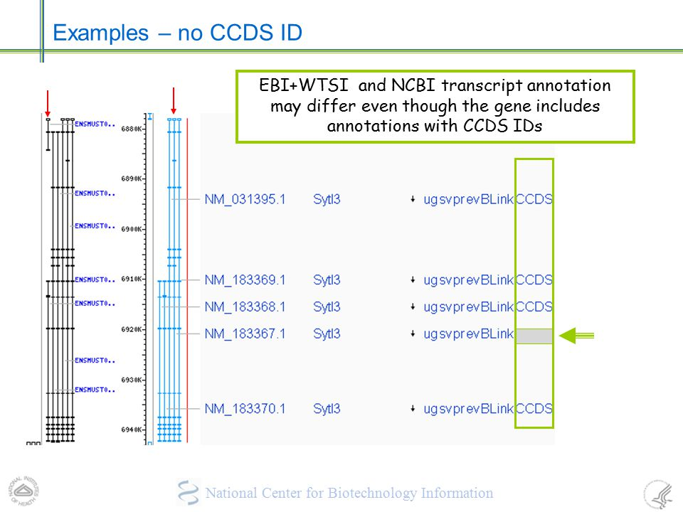 Examples – no CCDS ID EBI+WTSI and NCBI transcript annotation may differ even though the gene includes annotations with CCDS IDs.