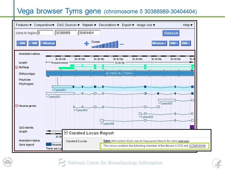 Vega browser Tyms gene (chromosome 5 30388989-30404404)