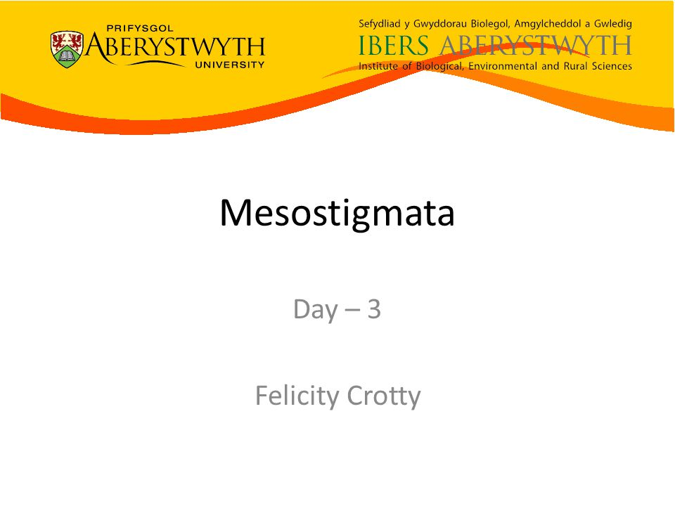 Mesostigmata Day – 3 Felicity Crotty