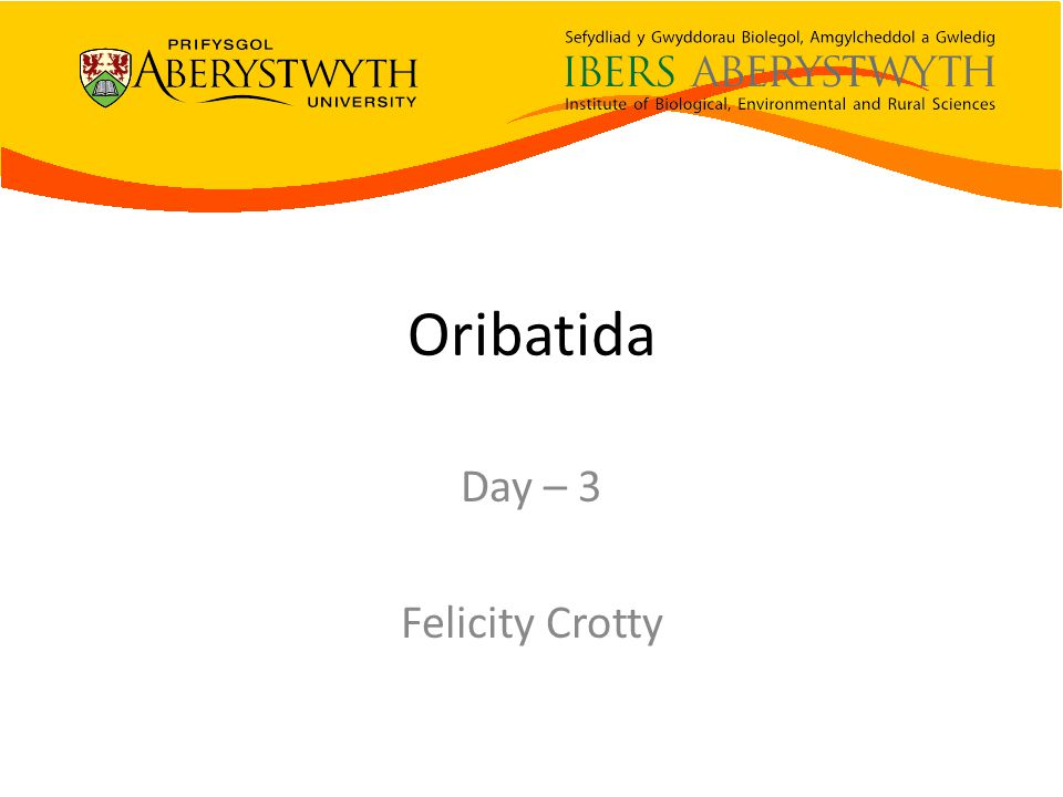 Oribatida Day – 3 Felicity Crotty