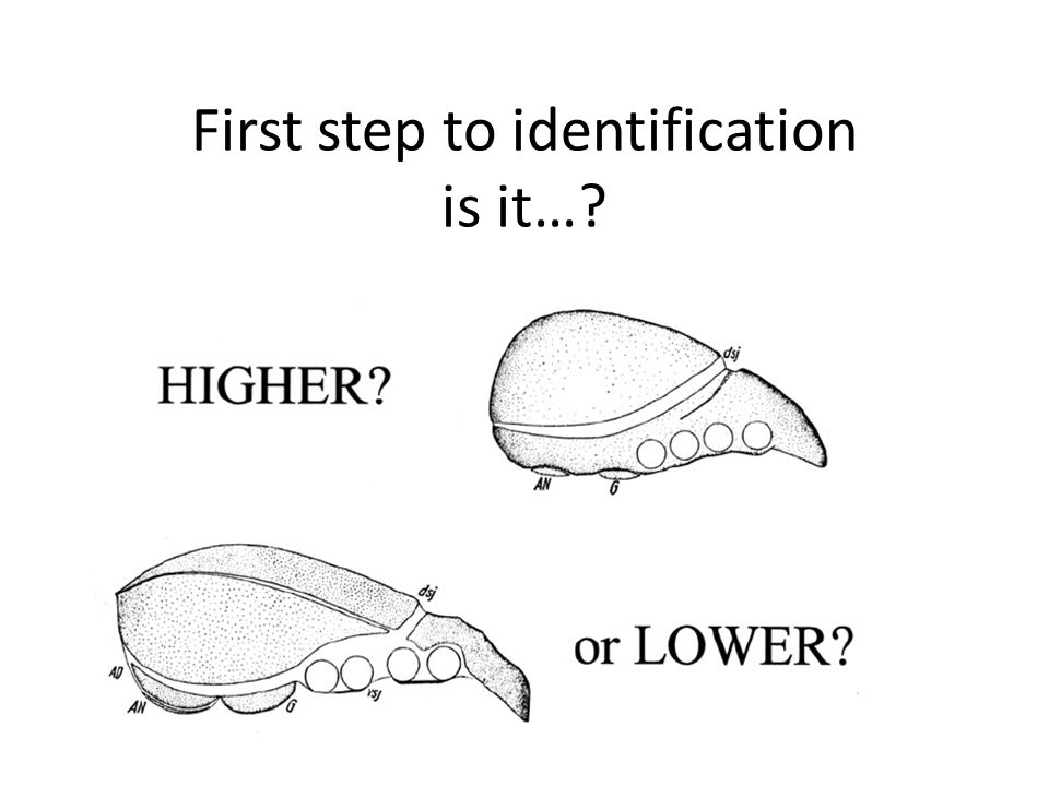 First step to identification is it…