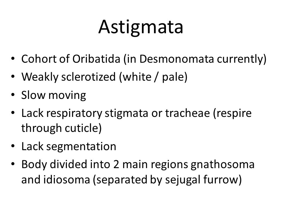 Astigmata Cohort of Oribatida (in Desmonomata currently)
