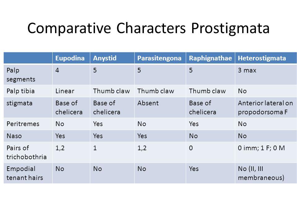 Comparative Characters Prostigmata