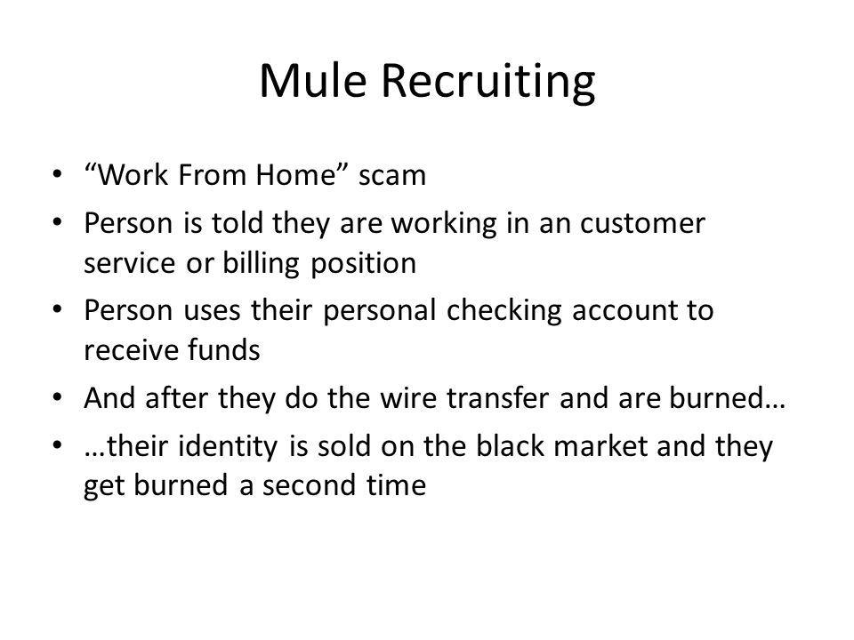 Mule Recruiting Work From Home scam