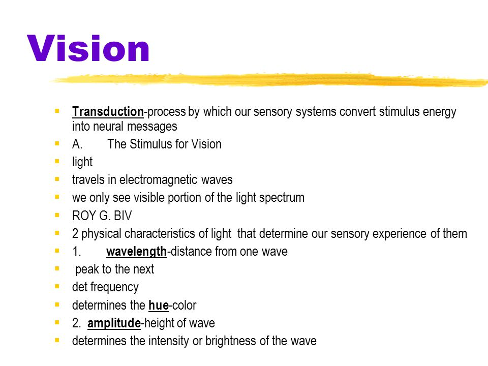 Vision Transduction-process by which our sensory systems convert stimulus energy into neural messages.