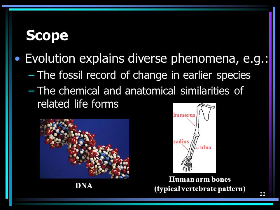 Human arm bones (typical vertebrate pattern)