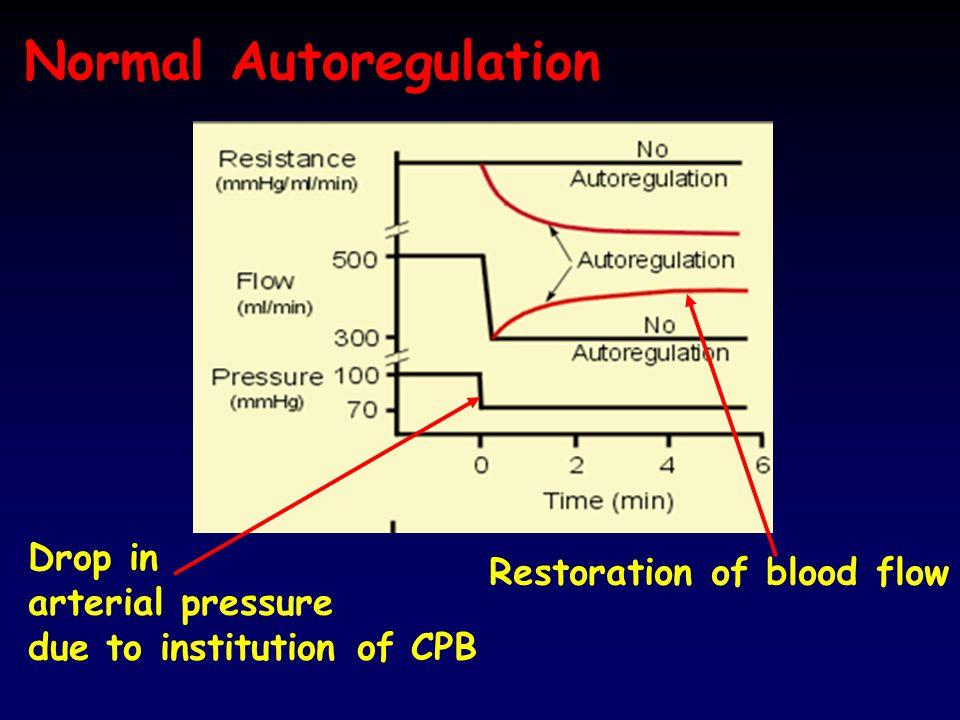 Normal Autoregulation