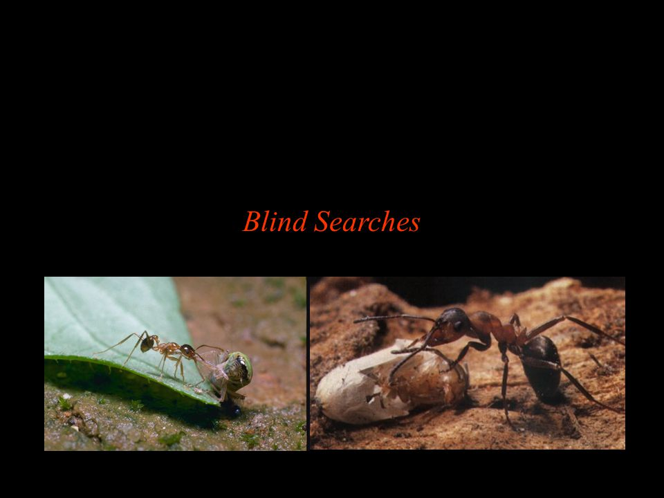 Blind Searches