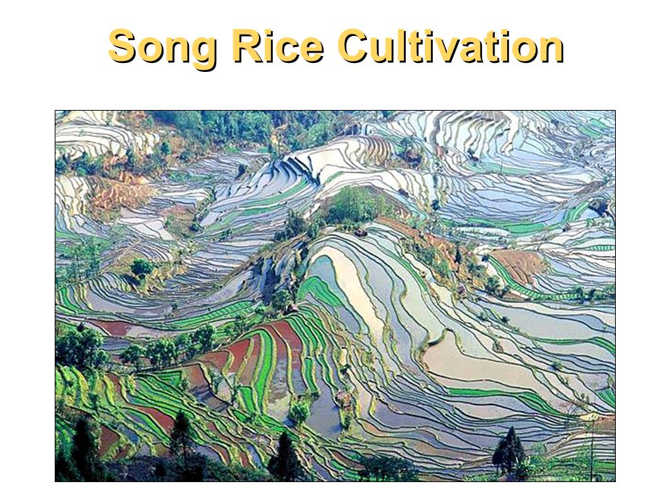 Song Rice Cultivation Above is a picture of Suzhou in Jiangsu province showing houses along the Grand Canal.