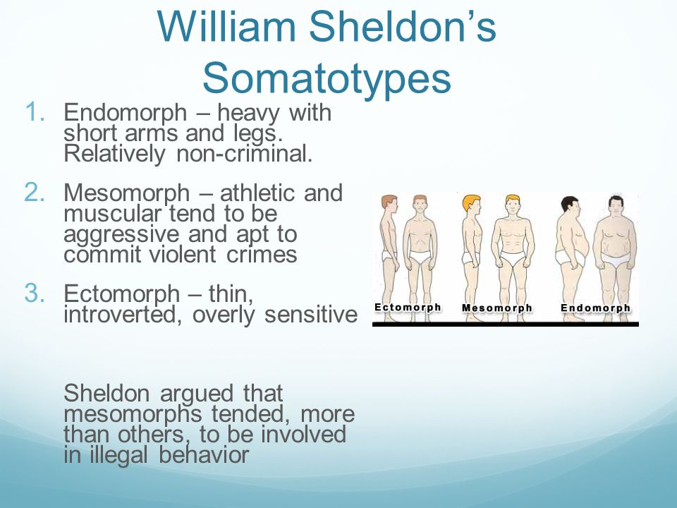 William Sheldon's Somatotypes