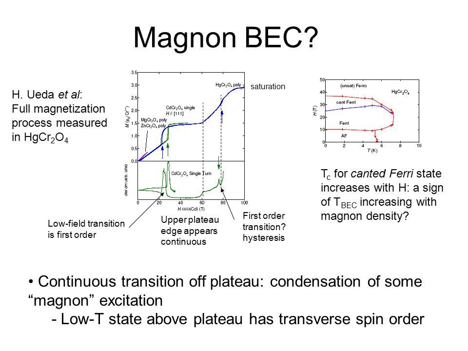 Magnon BEC saturation. H. Ueda et al: Full magnetization process measured in HgCr2O4.