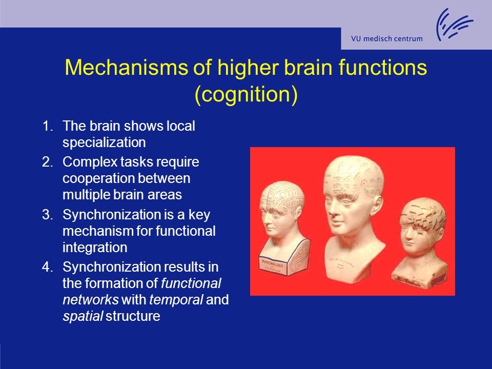 Mechanisms of higher brain functions (cognition)