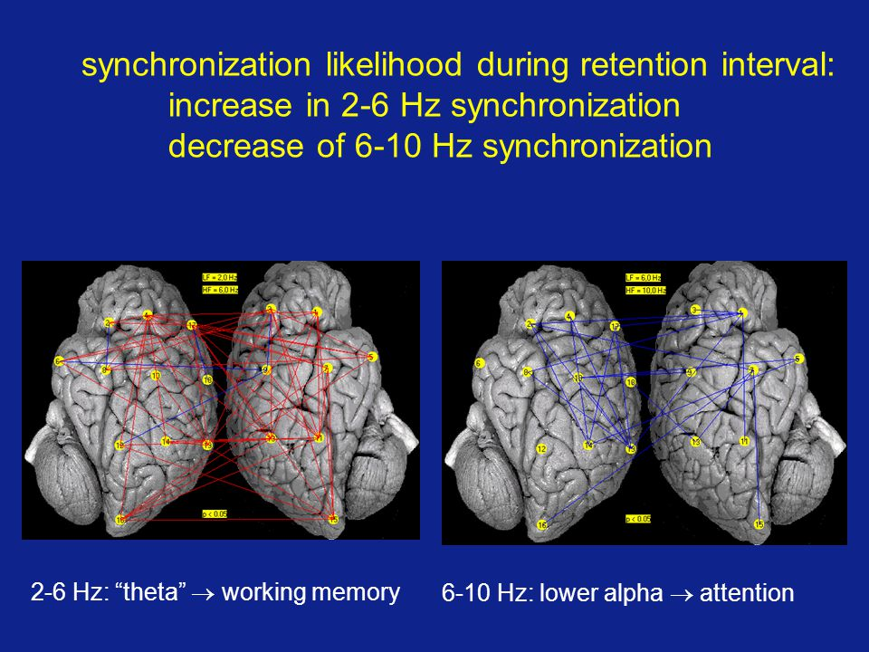 synchronization likelihood during retention interval: