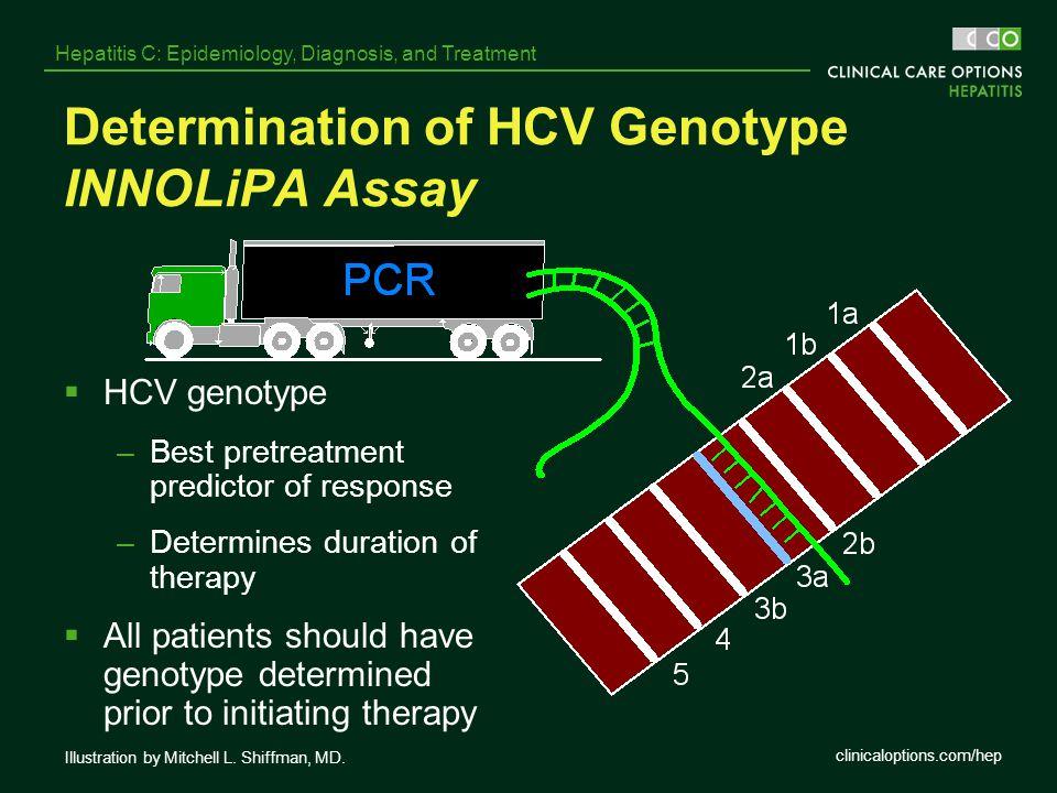 Determination of HCV Genotype INNOLiPA Assay