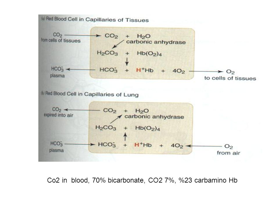 Co2 in blood, 70% bicarbonate, CO2 7%, %23 carbamino Hb