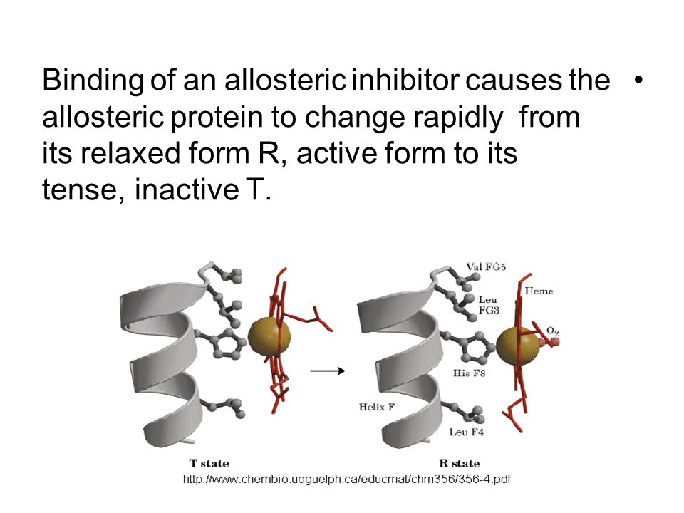 Binding of an allosteric inhibitor causes the allosteric protein to change rapidly from its relaxed form R, active form to its inactive T.
