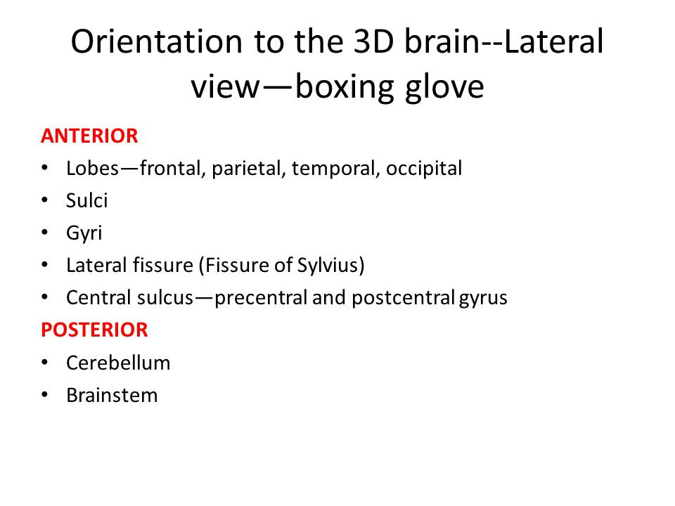Orientation to the 3D brain--Lateral view—boxing glove