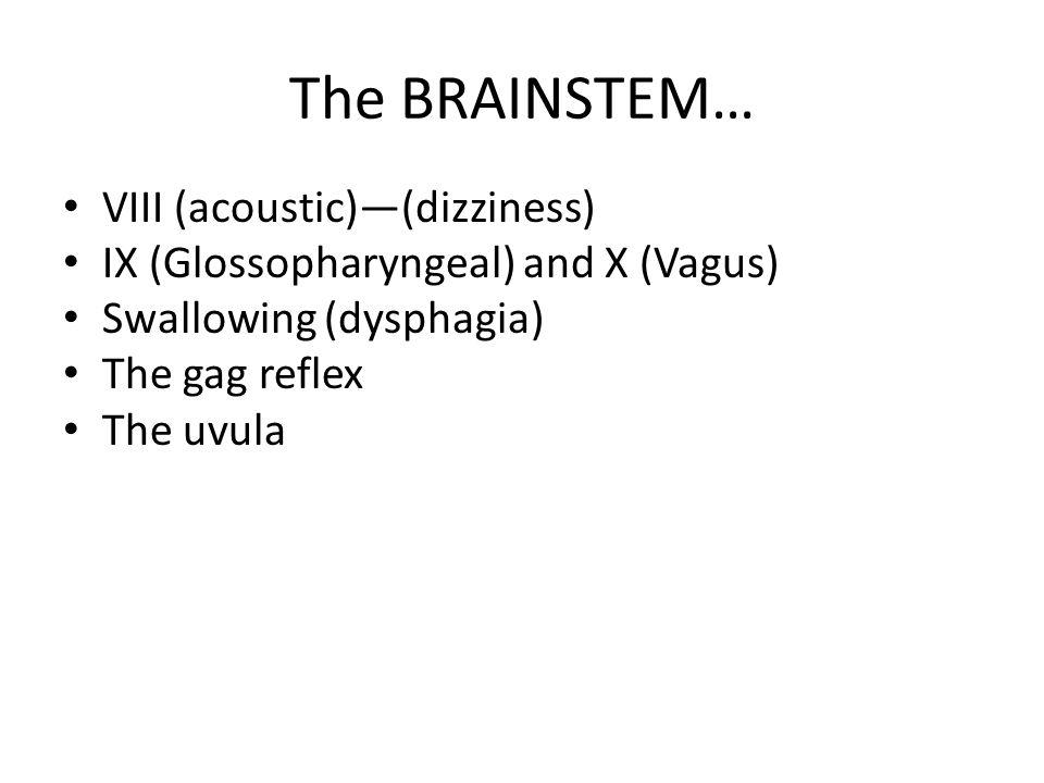 The BRAINSTEM… VIII (acoustic)—(dizziness)