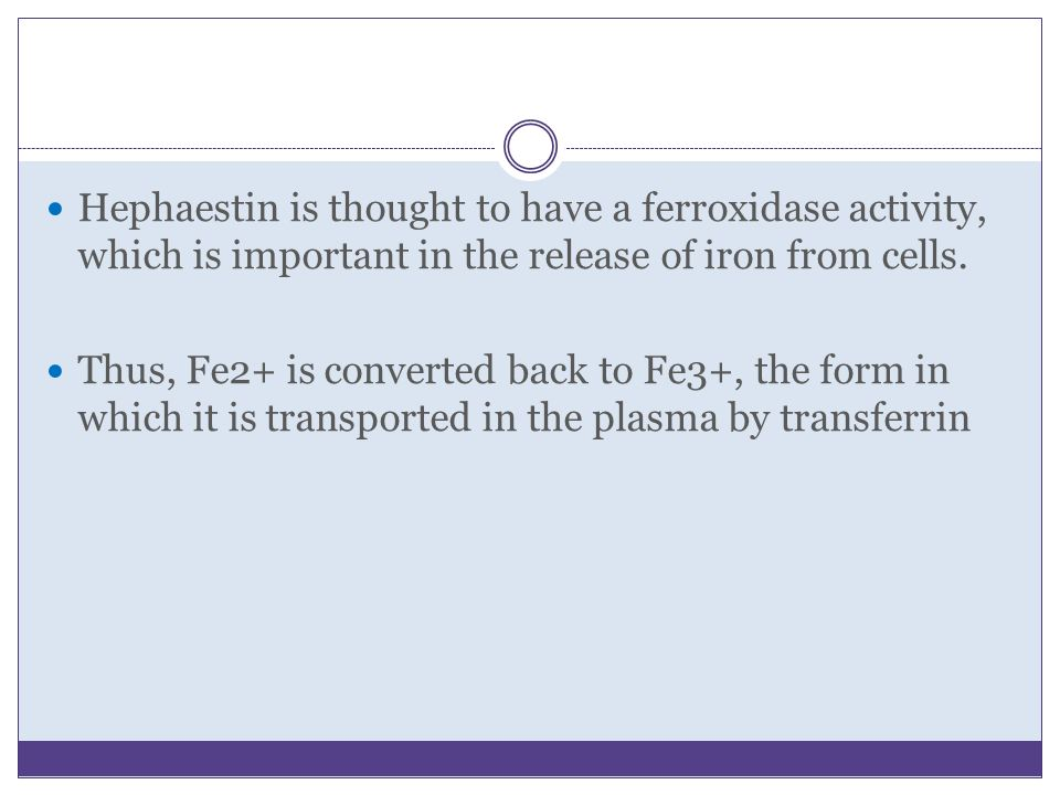 Hephaestin is thought to have a ferroxidase activity, which is important in the release of iron from cells.