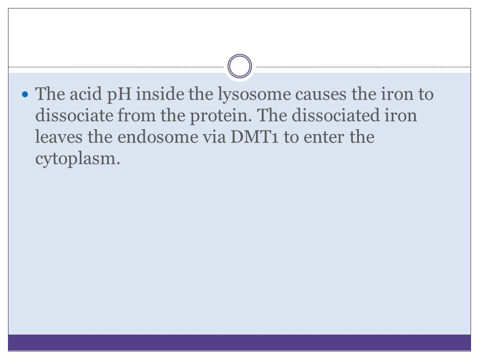 The acid pH inside the lysosome causes the iron to dissociate from the protein.