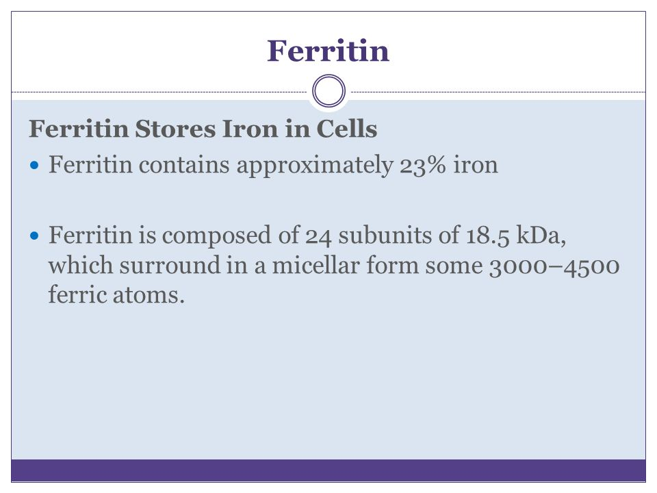 Ferritin Ferritin Stores Iron in Cells