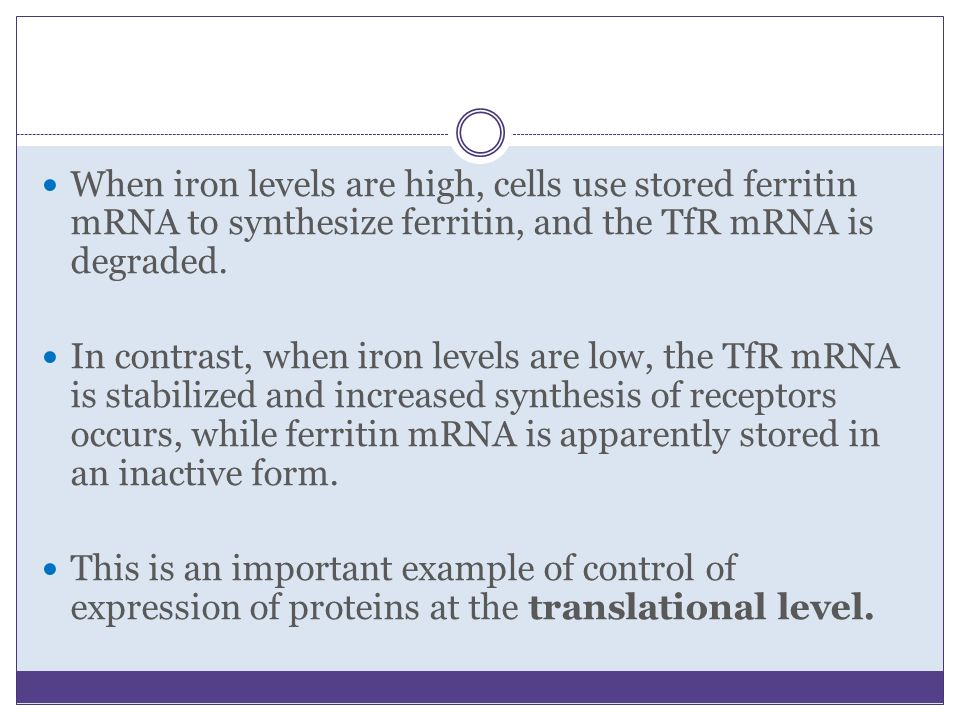 When iron levels are high, cells use stored ferritin mRNA to synthesize ferritin, and the TfR mRNA is degraded.