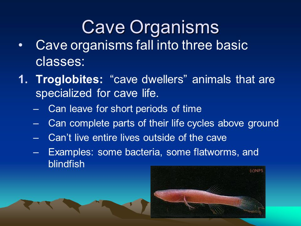 Cave Organisms Cave organisms fall into three basic classes: