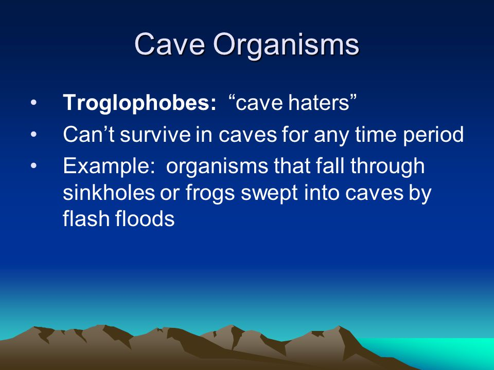 Cave Organisms Troglophobes: cave haters