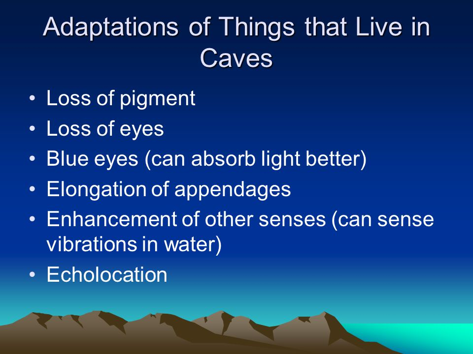 Adaptations of Things that Live in Caves