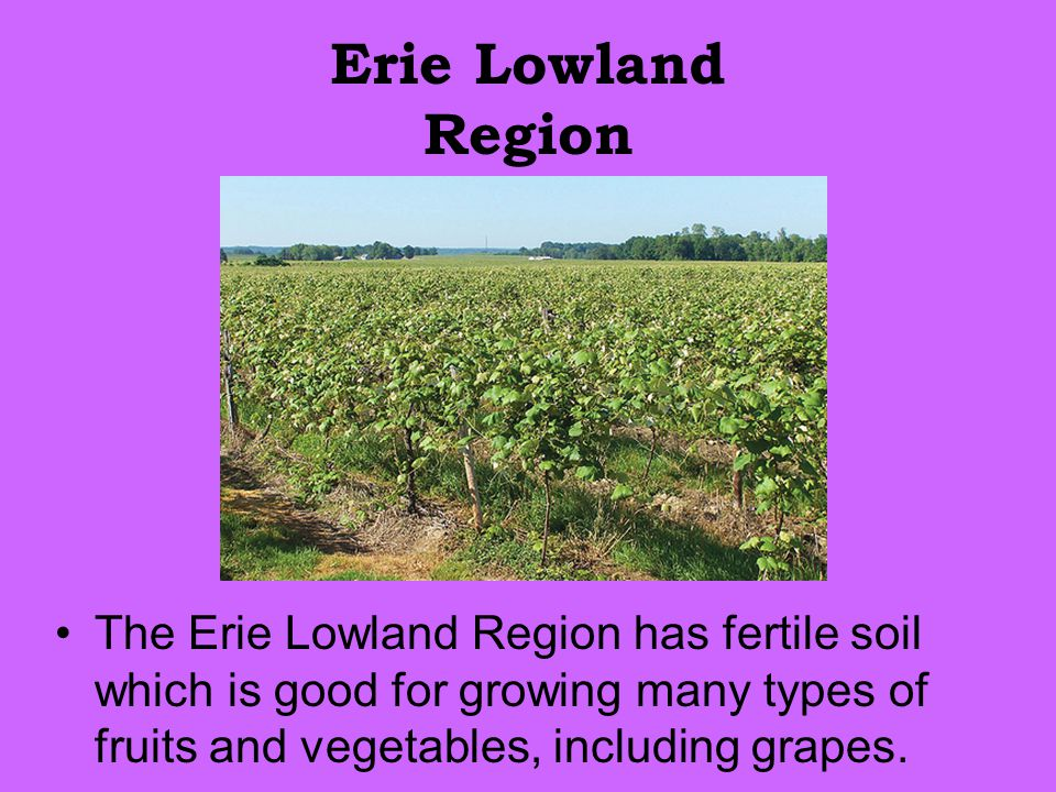Erie Lowland Region The Erie Lowland Region has fertile soil which is good for growing many types of fruits and vegetables, including grapes.