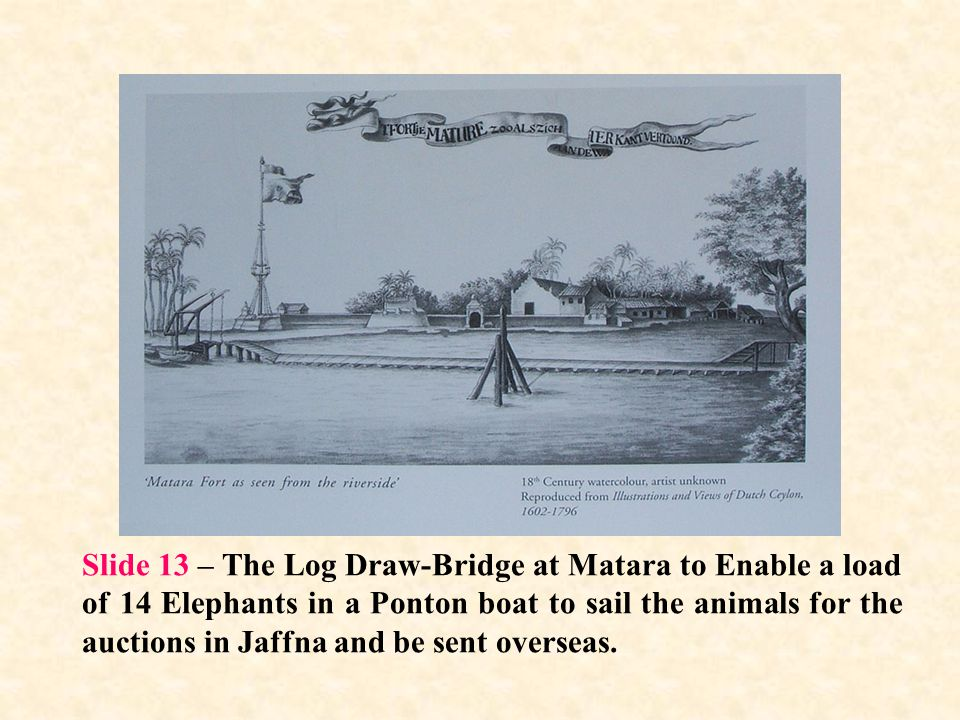 Slide 13 – The Log Draw-Bridge at Matara to Enable a load of 14 Elephants in a Ponton boat to sail the animals for the auctions in Jaffna and be sent overseas.