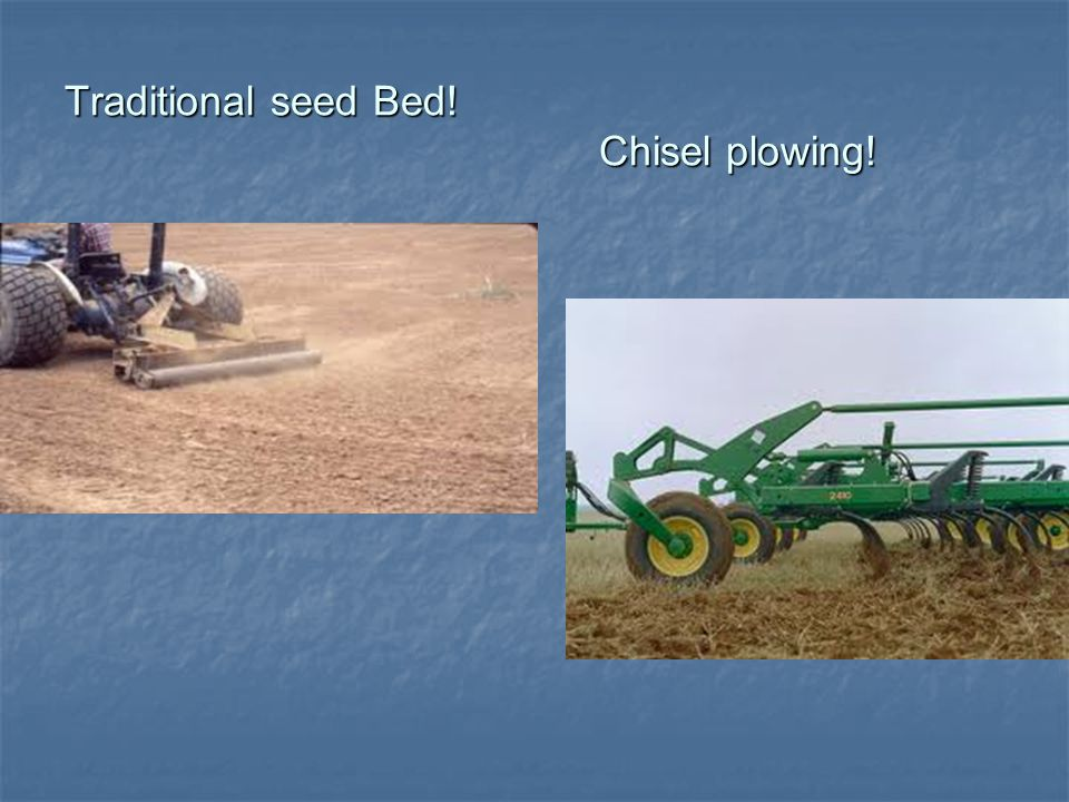 Traditional seed Bed! Chisel plowing!