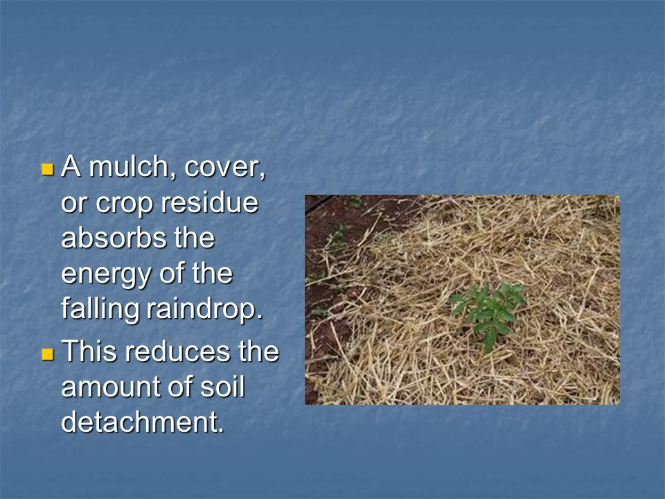 A mulch, cover, or crop residue absorbs the energy of the falling raindrop.
