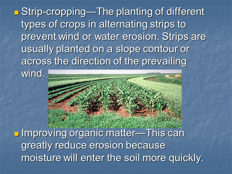Strip-cropping—The planting of different types of crops in alternating strips to prevent wind or water erosion. Strips are usually planted on a slope contour or across the direction of the prevailing wind.