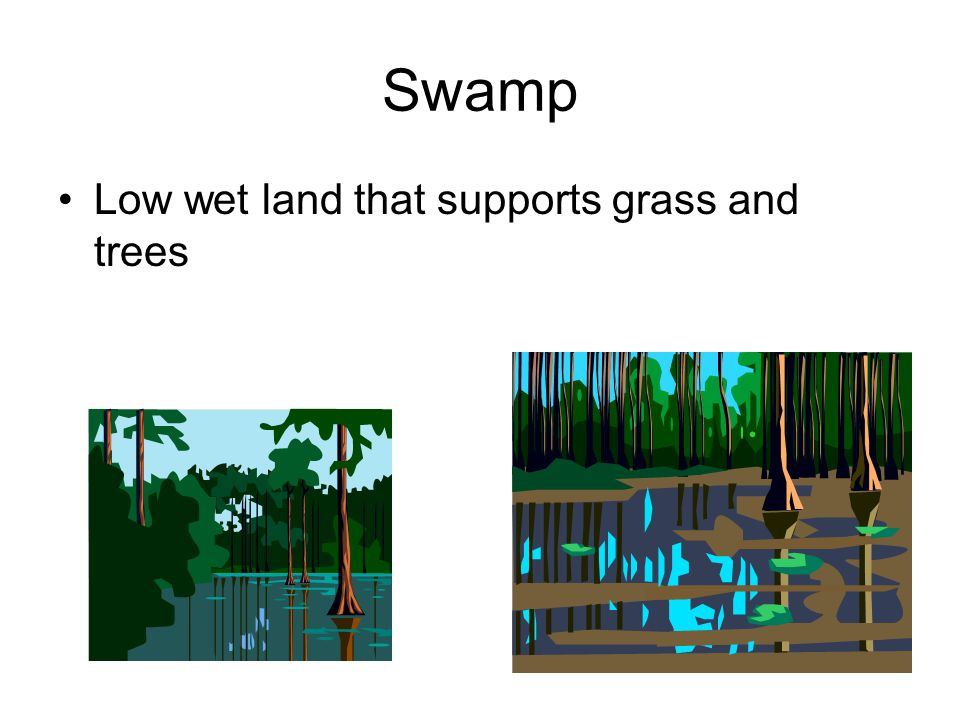Swamp Low wet land that supports grass and trees