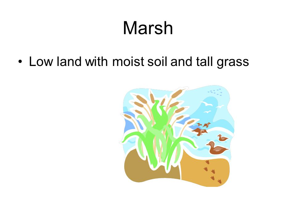 Marsh Low land with moist soil and tall grass