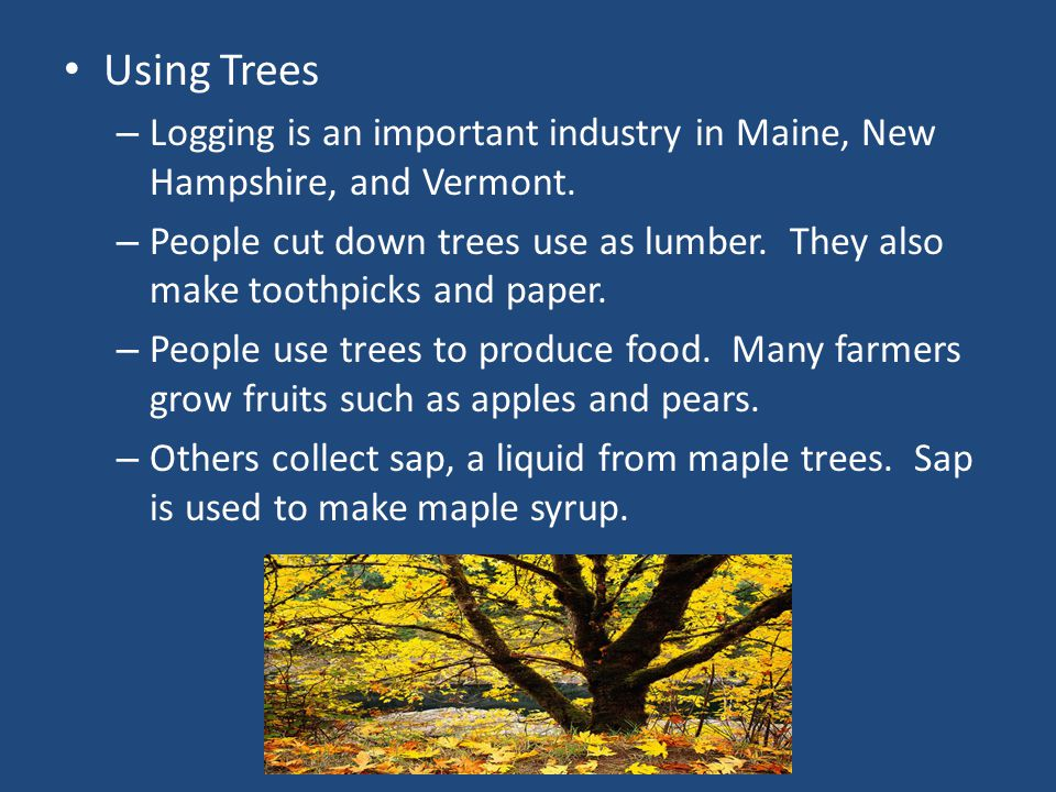 Using Trees Logging is an important industry in Maine, New Hampshire, and Vermont.