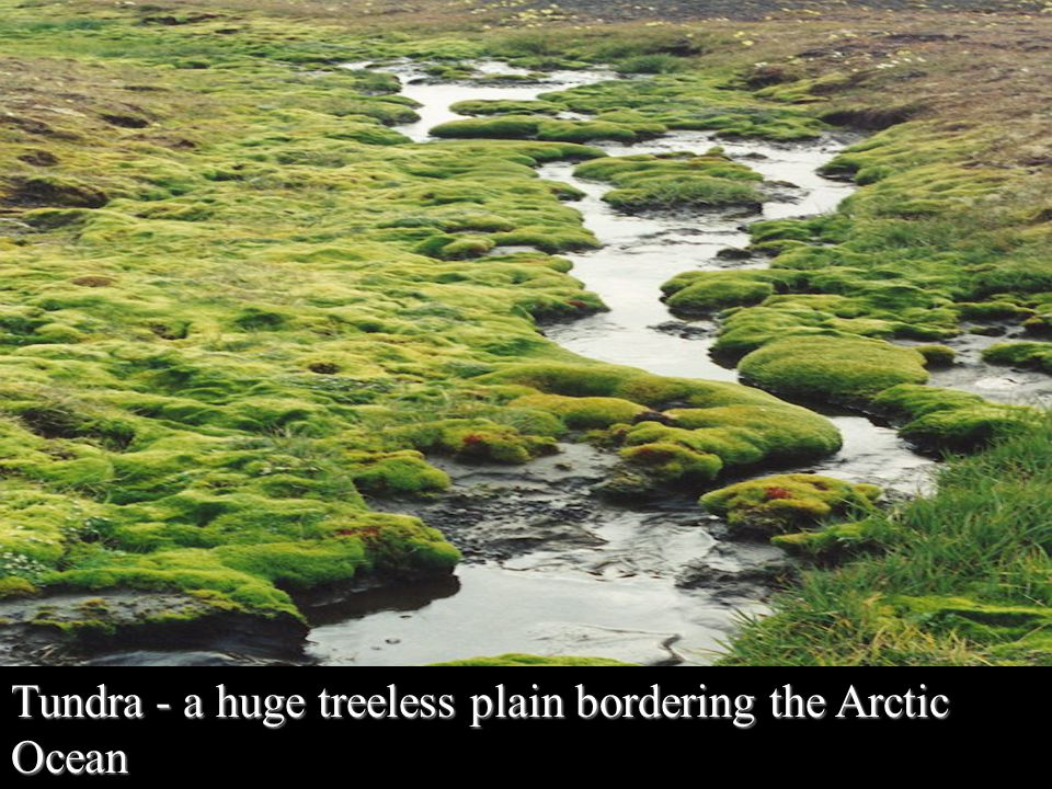 Tundra - a huge treeless plain bordering the Arctic Ocean