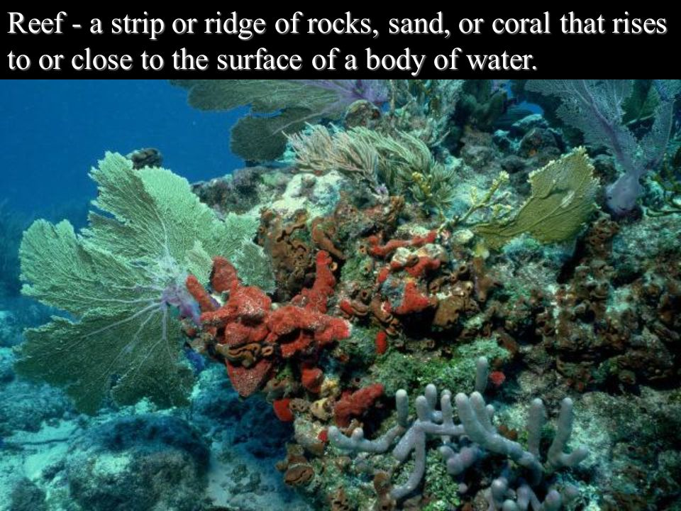 Reef - a strip or ridge of rocks, sand, or coral that rises to or close to the surface of a body of water.