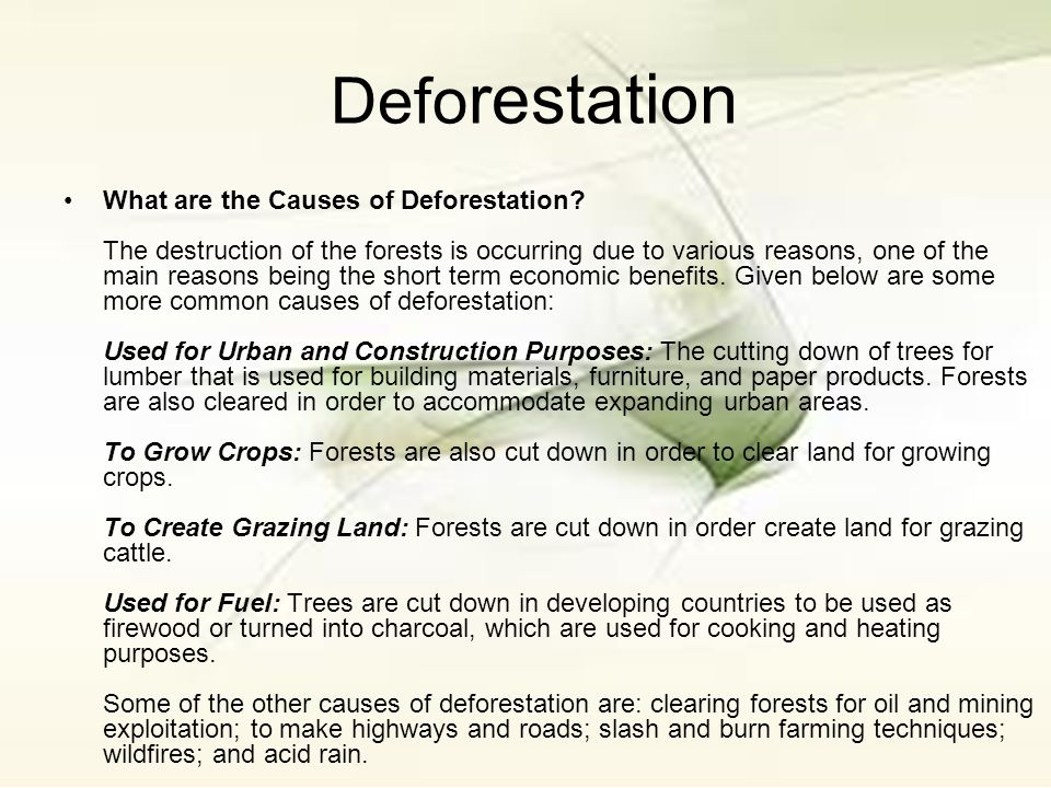 clear forest lands essay Simply clear some land then move on to another area when the land is no longer viable developers can also acquire rights to unoccupied forest land simply by using it for at least one year and a day -- typically by burning the native forest and establishing some cattle on the land.