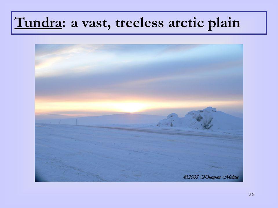Tundra: a vast, treeless arctic plain