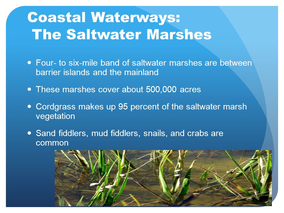 Coastal Waterways: The Saltwater Marshes