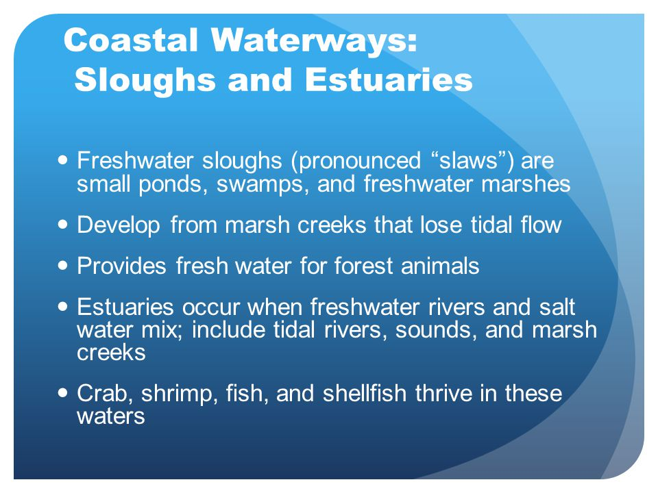 Coastal Waterways: Sloughs and Estuaries