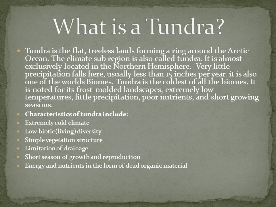 What is a Tundra