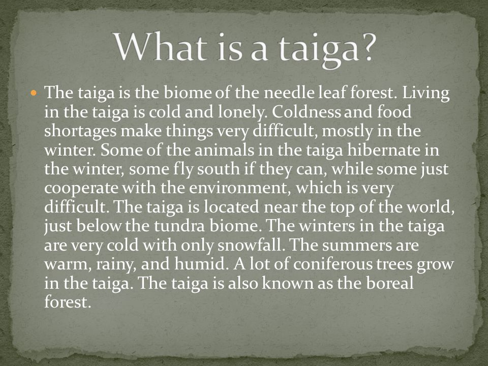 What is a taiga
