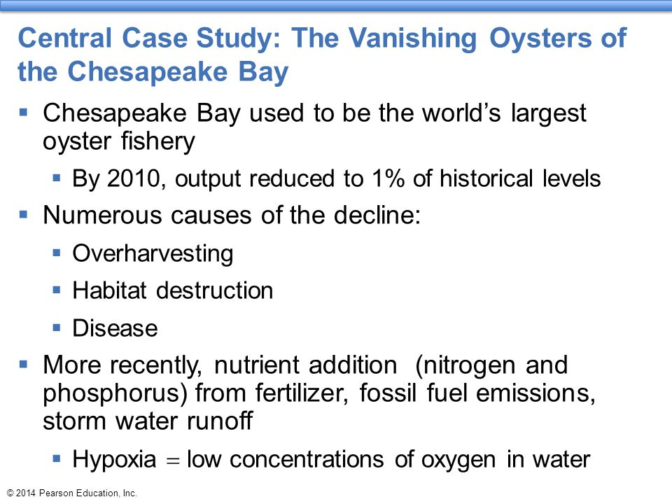 Central Case Study: The Vanishing Oysters of the Chesapeake Bay