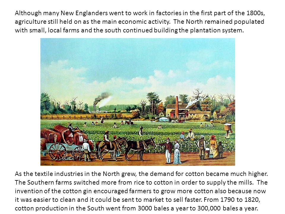 Although many New Englanders went to work in factories in the first part of the 1800s, agriculture still held on as the main economic activity. The North remained populated with small, local farms and the south continued building the plantation system.