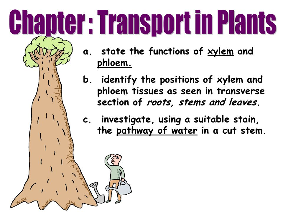 Chapter : Transport in Plants