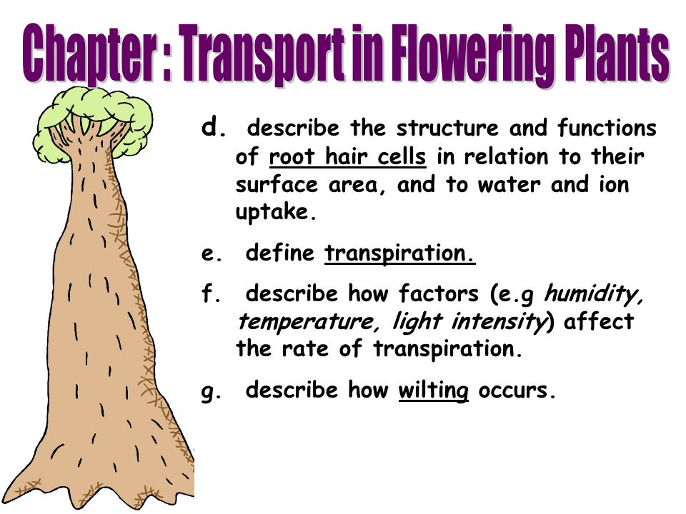 Chapter : Transport in Flowering Plants
