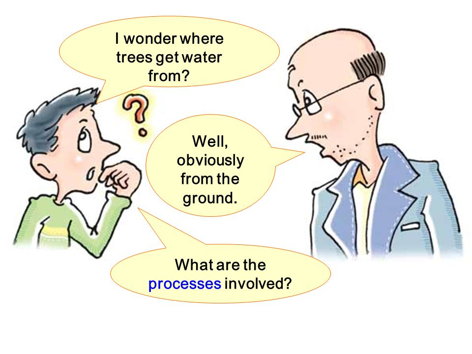 I wonder where trees get water from